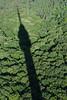 . (Dunav je more!) Tags: green tower forest serbia avala obliquemind obliquamente