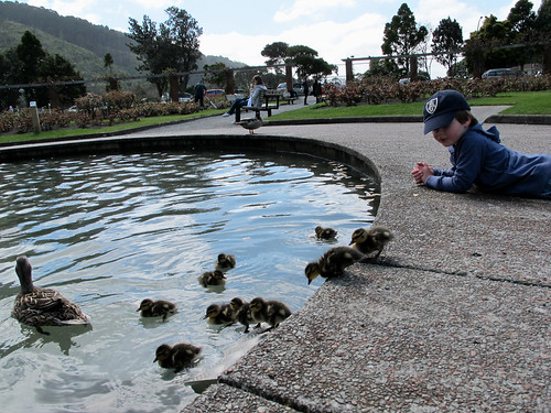 in awe of ducklings