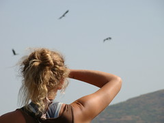 bex and the wolly necked cranes (nativeplace gardener) Tags: birds garden place native kamshet