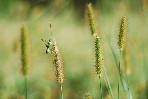 Looks like this grasshopper isn't singing the autumn away