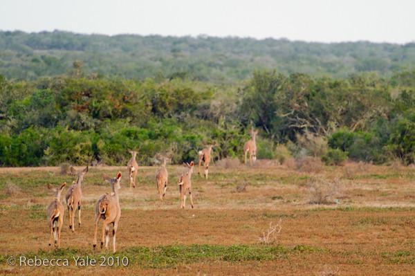 RYALE_SA_National_Park_Addo_82