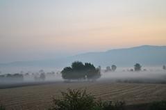 Riecco l'autunno (ziggiotti ivano (Ziggy Stardust)) Tags: alberi italia nebbia autunno vicenza veneto colliberici