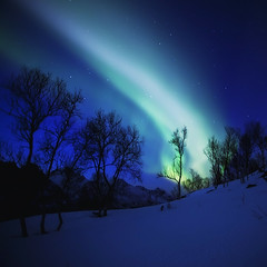 LAST SEASONS AURORA BOREALIS [EXPLORE FRONTPAGE] (~~~johnny~~~) Tags: trees sky art stars interesting silhouettes explore frontpage auroraborealis 2010 johnnymyrenghenriksen