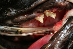 Resorptive Lesion