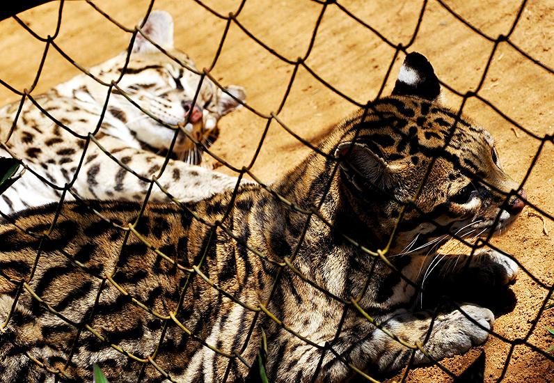 soteropoli.com fotografia fotos de salvador bahia brasil brazil 2010 zoo zoologico by tuniso (3)