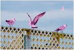 Birds - Pink Seagulls