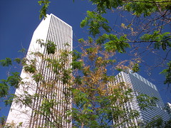 Skyscapers and Trees (Mike Chunko) Tags: boats lakemichigan ferriswheel navypier trumptower chicagoriver johnhancockcenter chicagoillinois smithandwollensky aquatower skyscrapersmetra