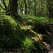 69 pembrokeshire Ty Canol Wood