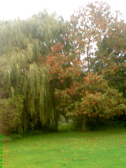 North London: Totteridge in the Autumn