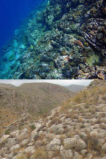 Comparación de un arrecife actual (Bali, Indonesia) y un arrecife fósil (Almería, España) - 02 por Banco de Imágenes Geológicas