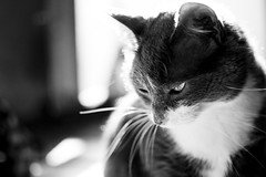 Thinking #289/365 (A. Aleksandraviius) Tags: bw pet white black oneaday animal cat 35mm nikon photoaday 365 nikkor pictureaday d90 kat project365 365days nikkor35mm nikond90 289365 mza f18g 35mmf18g afsdxnikkor35mmf18g nikon35mm18g
