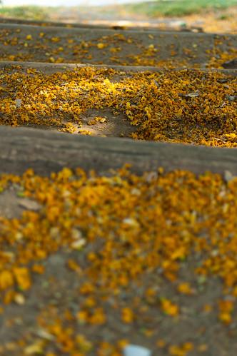 polen stairs
