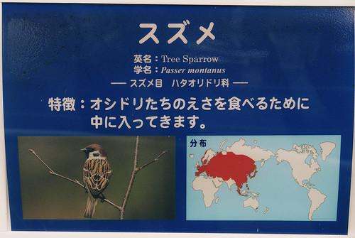 動物園でスズメが見られる理由とは…