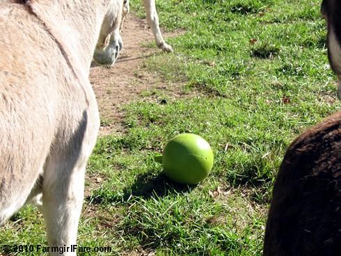 Donkey Ball 1