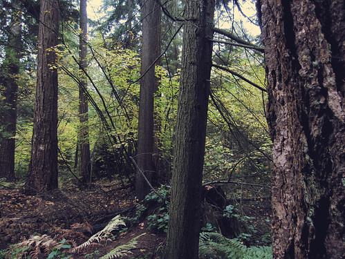 forestflight