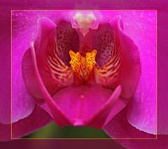 Orchid's secrets (tresed47) Tags: flowers macro longwoodgarden peterscamera petersphotos bryanscamera 20100307longwoodhyperfocus