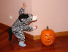 Halloween Zebra