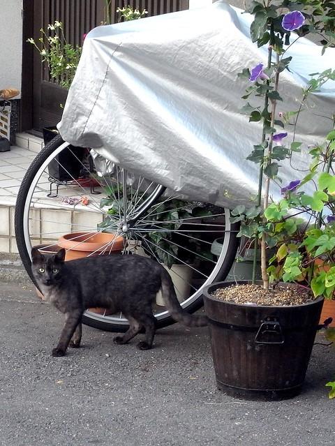 Today's Cat@2010-10-31