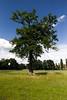 IMG_5810 (l3enjamin) Tags: blue sky cloud tree green topf25 grass topv111 photo yahoo interestingness topf50 topv555 topv333 topf75 flickr ben topv999 vert bleu ciel topv shield benjamin nuage arbre flick herbe photographe barrière flickraward geocity camera:make=canon exif:make=canon exif:iso_speed=1600 exif:focal_length=24mm camera:model=canoneos5d geostate geocountrys exif:model=canoneos5d exif:lens=ef1740mmf4lusm exif:aperture=ƒ80