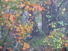 brume d'automne (b.four) Tags: mist leaf nebbia brume feuille dda alpesmaritimes naturesfinest coth cherryontop bej abigfave anawesomeshot impressedbeauty flickrdiamond diamondclasphotographer citrit saintbarnabé mygearandme mygearandmepremium