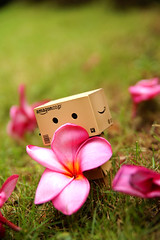 moving the flower (os_bert2) Tags: flower grass danbo danboard