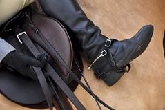 Stirrups Up (Lauren Barkume) Tags: show africa november horses horse leather southafrica boot spur competition riding glove breed johannesburg saddle joburg adjust stirrup laurenbarkume eatonfarm summershowingfestival