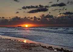 Sunrise Galveston Beach ~ Explored ~ (Ellen Yeates) Tags: sunrise sun sky cloud orange reflection seaweed ship float boat ocean texas galveston austin hdr birds wave sand ellen yeates dri canon beach explore explored