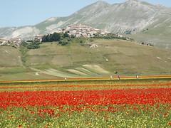 Castelluccio di Norcia - Fioritura (Riccardo599) Tags: parco italia di perugia dei monti norcia castelluccio nazionale umria sibillini fioritura valnerina