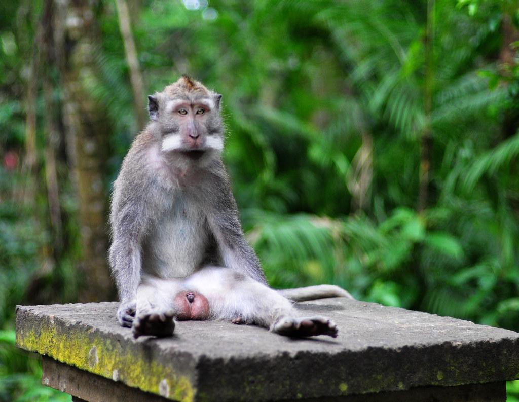Ubud, Bali - Monkey Forest