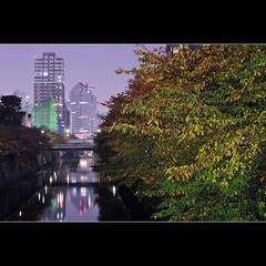 Autumn over Meguro river (Laurent T (aka thery_lg)) Tags: city longexposure autumn urban color tree leaves japan night river cherry tokyo cityscape purple nightshot violet metropolis bluehour meguro nakameguro