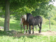 GOOD FRIENDS ! (picolojojo) Tags: horse nature cheval country panasonic campagni