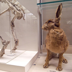 19nathist_0025 (KJ3 apparently) Tags: museum stuffed deadanimals surreal naturalhistory
