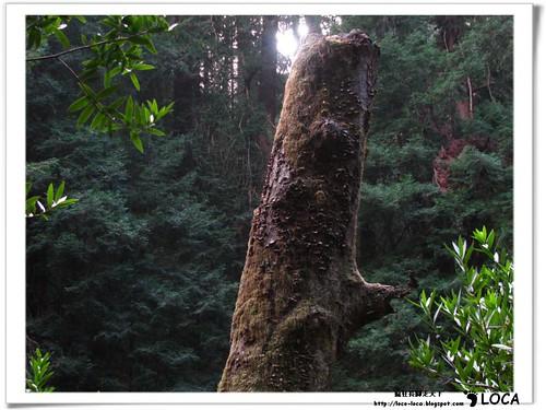 02-SF-Muir Woods-IMG_6558.jpg