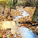 Creek in the woods near the spa resort Baile Olanesti