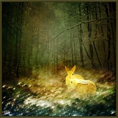 A ray of sunshine. (jaci XIII) Tags: snow bunny texture textura forest neve coelho floresta