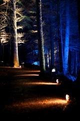 Enchanted Forest 41/45 (itmpa) Tags: wood trees light tree slr night forest canon dark scotland path perthshire lit nophotoshop enchanted enchantedforest pitlochry unedited 30d faskally canon30d straightfromthecamera faskallywood lochdunmore lightingshow bigtreecountry tomparnell itmpa archhist