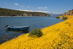 Plant Biodiversity - the art of nature /   -     (Akis Kev) Tags: flowers mountain snow nature water yellow landscape boat europe hellas greece  prespes  psarades
