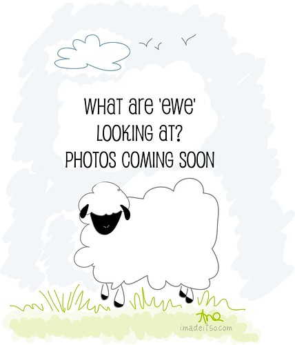 what are ewe looking at sheep illustration