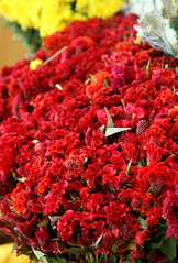 IMG_1314 (asadjaved) Tags: new india flower place market circus delhi mandi rajiv connaught chowk phool