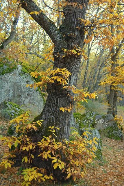 Vestido de otoño