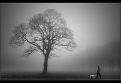 ... (Chrisconphoto) Tags: trees dog mist cold fog landscape walker sthelens merseyside chrisconway sherdleypark
