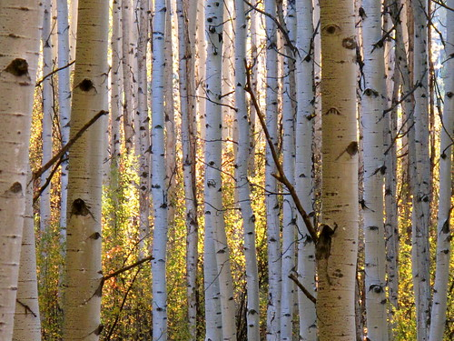 aspen fall light