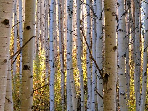 aspen fall light