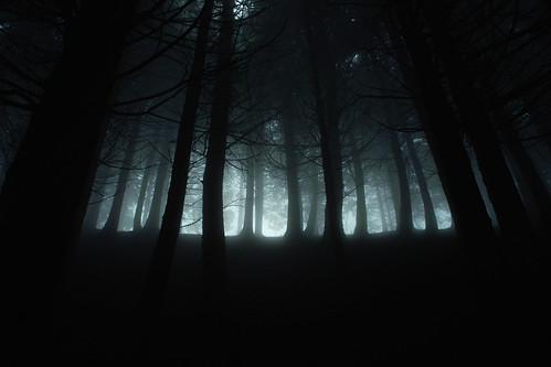 [フリー画像] 自然・風景, 森林, 樹木, 霧・霞, 日本, 201012070700