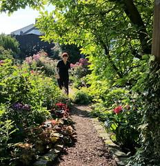 2017 Germany // Unser Garten - Our garden // im Juli // Ich (maerzbecher-Deutschland zu Fuss) Tags: 2017 garten natur deutschland germany maerzbecher garden unsergarten juli rosi