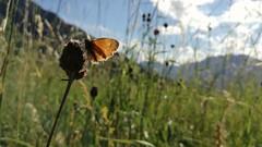 Only you (Alessio Bertolone) Tags: butterfly farfalla luce light backlight controluce dettagli details macro clouseup primopiano bokeh nature natura trentino italy italia it