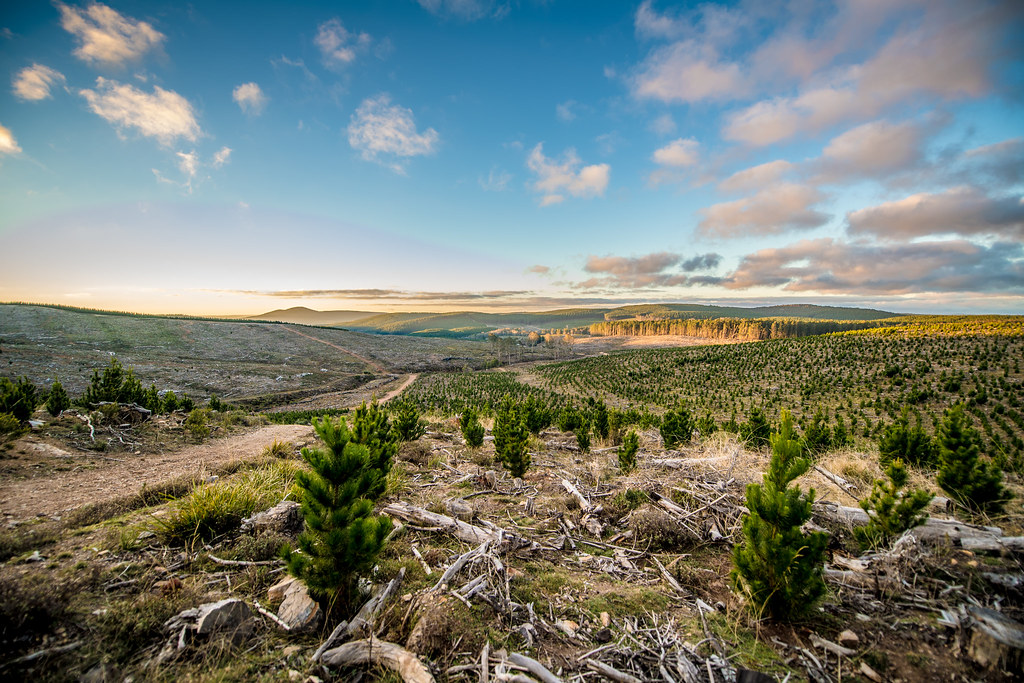 would awesome Talian Cocks Club Party For Hot Girls genuine woman, would like