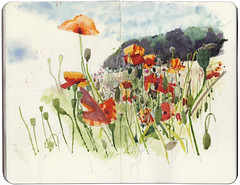 Wildflower meadow (Wil Freeborn) Tags: wood moleskine sketch o journal meadow poppies wildflower geordies yetts muckhart
