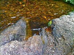 Clear waters (d.kroenung) Tags: orange color nature water cool rocks crystal clear pointreyes refreshing iphone alamerefalls iphone4