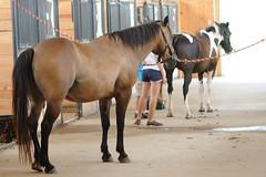 Horses (Montgomery Area Nontraditional Equestrians (MANE)) Tags: al mane pikeroad